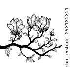 magnolia tree isolated on a... | Shutterstock .eps vector #293135351