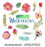vector watercolor hand drawn... | Shutterstock .eps vector #293237021
