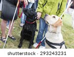 Blind People And Guide Dogs...