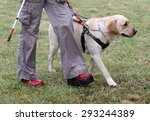 a blind person is led by her... | Shutterstock . vector #293244389
