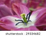 macro of the heart of a flower - stock photo