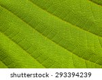 green leaf texture background. | Shutterstock . vector #293394239