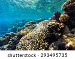 Red Sea Coral Reef With Hard...