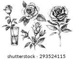 roses set  floral design... | Shutterstock .eps vector #293524115