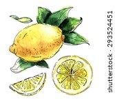 watercolor set of lemons. lemon ... | Shutterstock .eps vector #293524451