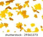 falling autumn leafs of maple | Shutterstock . vector #29361373