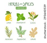 herbs and spices collection 2.... | Shutterstock .eps vector #293640539