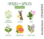 herbs and spices collection 7.... | Shutterstock .eps vector #293640545
