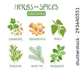 herbs and spices collection 6.... | Shutterstock .eps vector #293640551