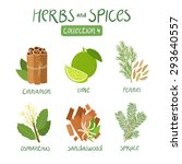 erbs and spices collection 4.... | Shutterstock .eps vector #293640557