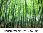 bamboo forest | Shutterstock . vector #293657609