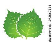 perilla illustrations | Shutterstock .eps vector #293667881