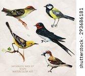 vector set of naturalistic... | Shutterstock .eps vector #293686181