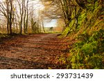 Autumn Pathway. Co.cork ...