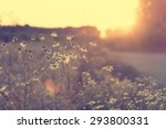 beautiful wild flowers in... | Shutterstock . vector #293800331