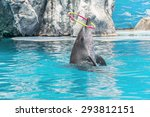 Dolphin Show In The Water Park...
