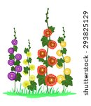 Stylized Vector Mallow Flowers...