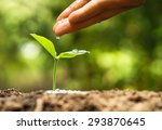 Hand Nurturing And Watering A...