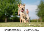 young labrador retriever dog in ... | Shutterstock . vector #293900267