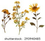 set of wild dry pressed flowers ... | Shutterstock . vector #293940485