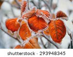 Beautiful Winter Image   Close...