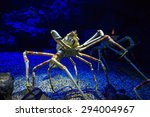 Giant Japanese Spider Crab In ...