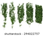 ivy ivy leaves isolated on a... | Shutterstock . vector #294022757