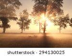 Summer Foggy Sunrise On Pastur...