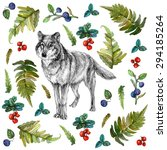 hand drawn wolf with fern green ... | Shutterstock . vector #294185264