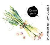 lemon grass. hand drawn... | Shutterstock .eps vector #294203015