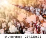 close up of ripe cotton bolls... | Shutterstock . vector #294220631