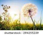 dandelion in the evening during ... | Shutterstock . vector #294255239
