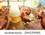 chicken farm organic from... | Shutterstock . vector #294259985