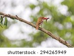beautiful bird  female banded... | Shutterstock . vector #294265949