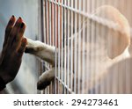 Stock photo human hand is touching a cute little doggie paw through a fence of a adoption centre 294273461