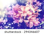 Photo of beautiful bright pink blossom, abstract natural background, fine art, spring time season, pink blooming in sunny day, floral wallpaper, soft focus, little pink flowers on tree branch.