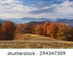 Beech Forest With Orange Leave...