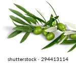 olive  olive branch  leaf. | Shutterstock . vector #294413114