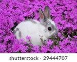 bunny in flowers   Shutterstock . vector #29444707