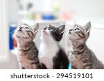 Three Young Cute Cats Look...