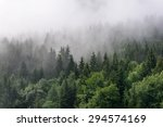 Evergreen Forest Overview  ...