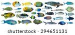 collection of tropical fishes... | Shutterstock . vector #294651131