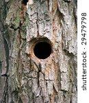 Bird House  Bark Of Tree With ...