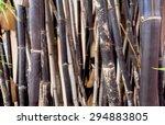 Blur Background Black Bamboo...