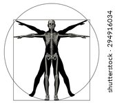 vitruvian human or man as a... | Shutterstock . vector #294916034