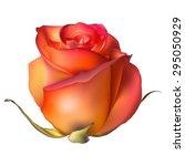 orange rose flower isolated on...   Shutterstock .eps vector #295050929