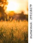 soft focus of grass and golden... | Shutterstock . vector #295118279