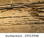 Termite Infested Wood Close Up.