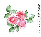 Three Roses Watercolor Vector...