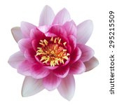 lotus flower isolated on white | Shutterstock . vector #295215509